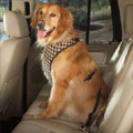 dog safety harness for car travel