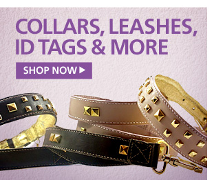 New Collars Leashes Id Tags—Shop Now