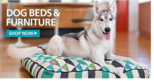 New Dog Beds and Furniture—Shop Now
