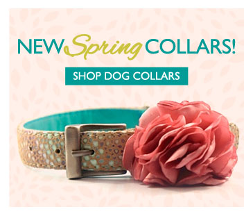 New Spring Collars! Shop Dog Collars—Click Here