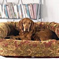 dog couches & sofas