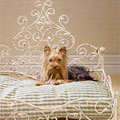 iron & wood dog beds