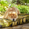 outdoor dog beds
