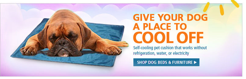 Dog Beds Bowls Collars Carriers Amp More Shop