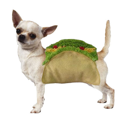 taco dog costume is the cutest small