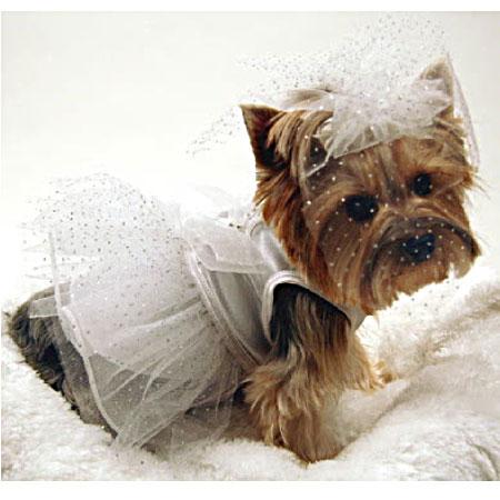The Perfect Dog Dress