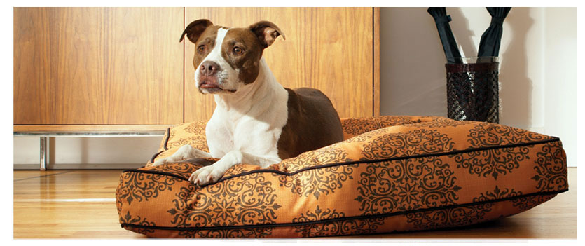 shop dog beds in all shapes, sizes and fabrics